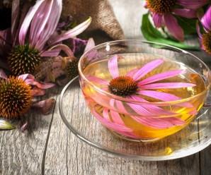 echinacea-tea2
